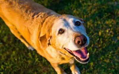 Happy and healthy senior pets