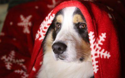 The 'Twelve Pet Hazards' of Christmas