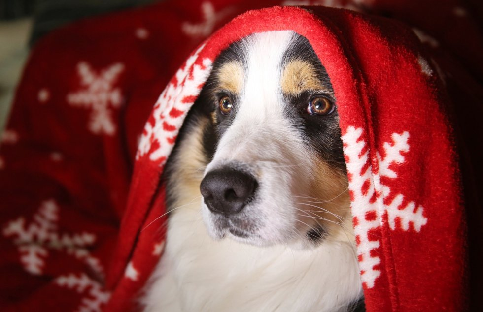 The 'Twelve Pet Hazards' of Christmas