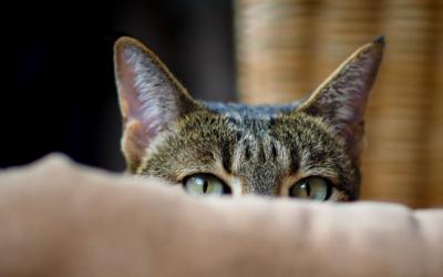 Cat anxiety: Not feline very good!